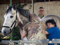 Salute: Esercito e Pet Therapy insieme