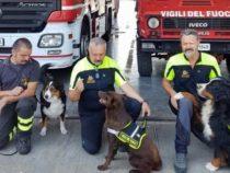 Unità Cinofile: I cani eroi dei vigili del fuoco