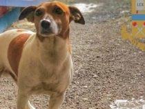 Cronaca: Pocho, il cane poliziotto che la camorra vuole uccidere