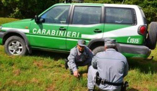 Forestali: Tre proposte di legge per scorporare il Corpo dall'Arma dei carabinieri