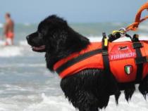 Unità cinofile: Premiazione cani salvataggio in mare