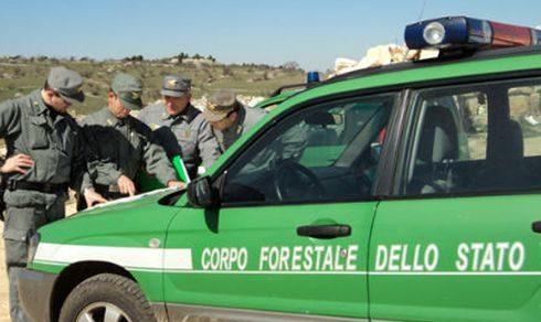 Ritorno del Corpo Forestale dello Stato: La proposta di legge