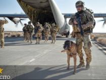 Cani con le stellette: Dignità anche dopo la pensione