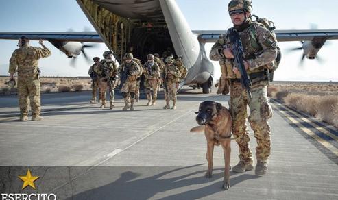 """Difesa: Nuovo appello per assistenza veterinaria per """"cani con stellette"""" a fine servizio"""