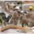 Lazio: Cerimonia di ringraziamento nei confronti dell'Esercito