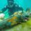 Palombari del GOS: Rimossi e neutralizzati oltre mille ordigni