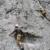 L'Aquila: Sulla parete con il 9° Reggimento Alpini
