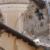 Convegno a Trieste: Disastri ambientali in Italia