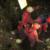 Calabria: Il Corpo nazionale soccorso alpino e speleologico (CNSAS)