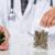 Cannabis terapeutica: Proposta di Coldiretti per la coltivazione al ministro Giulia Grillo