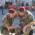Siena: Folgore, celebrato il 78° anniversario del 186mo reggimento