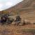 """Esercito: Conclusa esercitazione internazionale per tiratori scelti denominata """"Low Blow"""""""