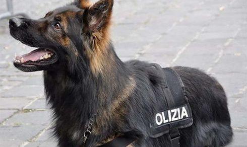 Trieste: Nucleo cinofilo della Polizia di Stato chiuso dal 2002, richiesto il ripristino