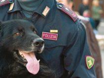 Polizia di Stato: Corso per conduttori cinofili specialisti in ricerca e soccorso