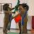 Esercito: Cambio di comando al 6° Reggimento Bersaglieri di Trapani