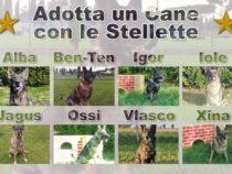 L'Esercito Italiano offre la possibilità di adottare i cani militari che vanno in pensione