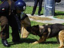 Carabinieri: Un manuale sul diritto penale e amministrativo a tutela degli animali