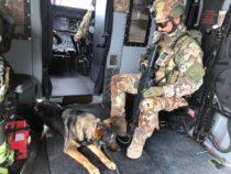 """Afghanistan: Missione """"Resolute Support"""", unità cinofile per la sicurezza"""