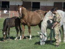 Esercito: Progetto sperimentale di riabilitazione avanzato mediante l'utilizzo del cavallo