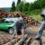 Concorso Pubblico: Bando per l'arruolamento di 11 tenenti dei carabinieri forestali