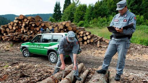 Corpo Forestale: Secondo la CEDU (Corte Europea dei Diritti dell'Uomo) l'accorpamento nei Carabinieri è illegittimo