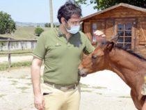 Difesa: Il Centro Militare di Equitazione dell'Esercito Italiano