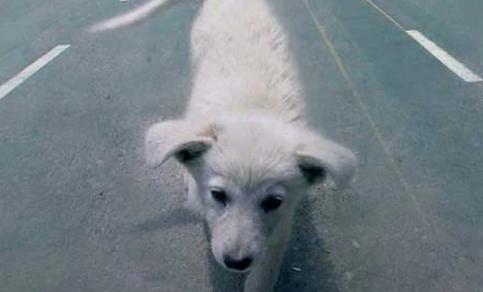 Polizia di Stato: Al via la campagna per la tutela degli animali domestici