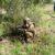 Esercito: Concluso il corso rilevamento CBRN