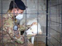 Kosovo: Un aiuto ai cani randagi arriva dai militari italiani
