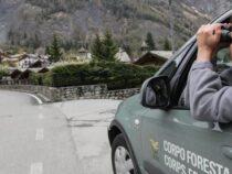 Corpo Forestale dello Stato: Perchè è stato azzerato lo storico Corpo di tutela dei nostri monti e parchi naturali